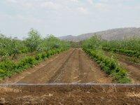 crop irrigation channels