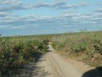 pindan dirt ahead en route to Willie Creek pearl farm