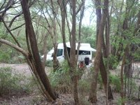 our motorhome in amongst the peppermint willows