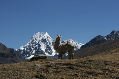 Andeanlodges