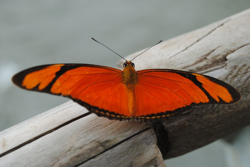 one of many beautifully colored butterflys at the falls