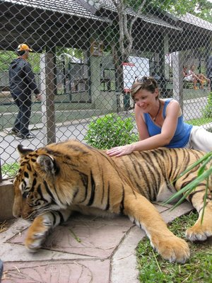 Tiger Kingdom... in the Year of the Tiger