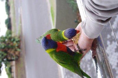 Feeding birds on our balcony