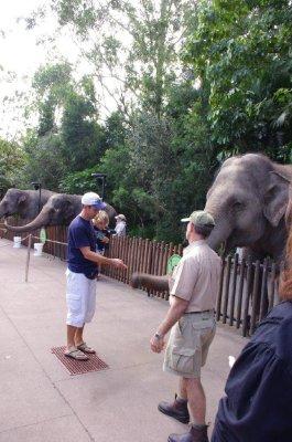 Feeding the elephants at Australia Zoo