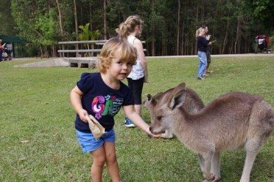 Nadia feeds a kangaroo at Australia Zoo