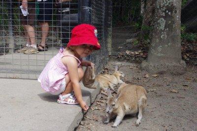 Nadia feeding wallabies at Cairns Tropical Zoo