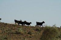 TKM10146_-.._Desert.jpg