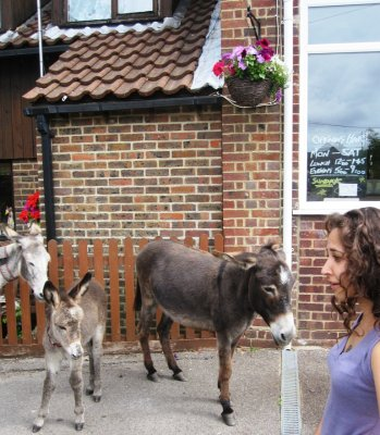 Donkeys in New Forest