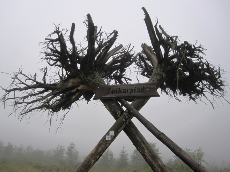 large_blog_black_forest_fog.jpg