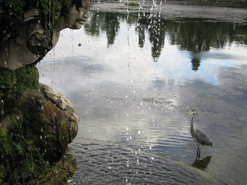 Heron in Kensington Gardens