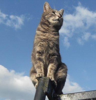 'Bandit' in the sky