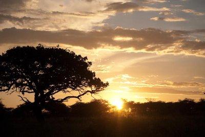 1005_Serengeti-2_0202.jpg