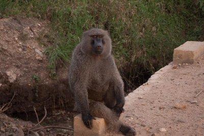 1005_Serengeti-2_0226.jpg