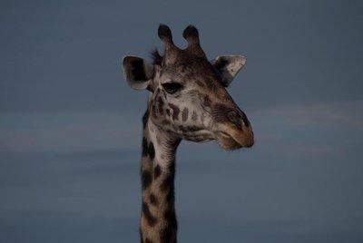1005_Serengeti_0041.jpg