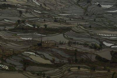 YuangYang4-440.jpg