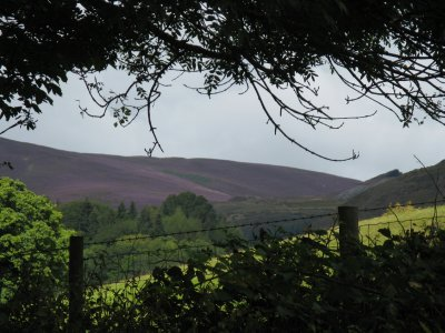 Heather-covered mountain, Horseshoe Pass