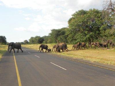 Africa_057.jpg