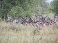 South_Africa_010.jpg