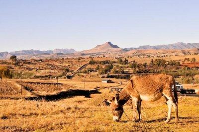 Lesotho_Vi.._Donkey.jpg