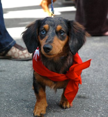 2012_Xmas_KW_Wieners_13.jpg