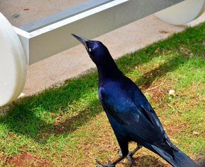 2015_MX_birds_1.jpg