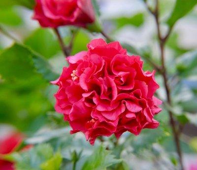 2016_Aug_AXA_flowers_-_2.jpg