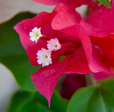 2016_Aug_AXA_flowers_-_3.jpg
