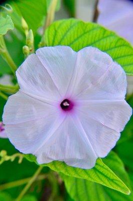 2016_Aug_AXA_flowers_-_4.jpg