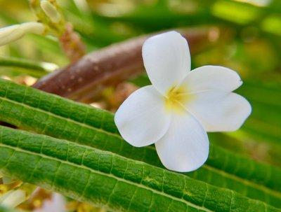 2016_Aug_AXA_flowers_-_7.jpg