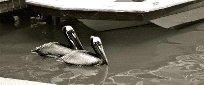 Longboat20..tLido08.jpg