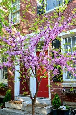 Philly_Spring13_C19_01.jpg