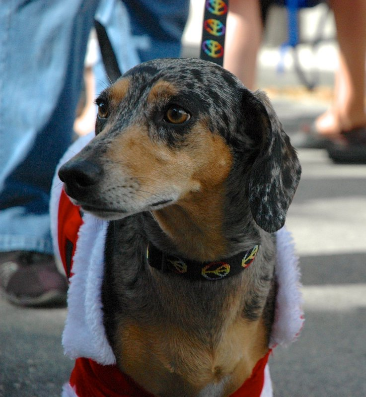 large_2012_Xmas_KW_Wieners_08.jpg