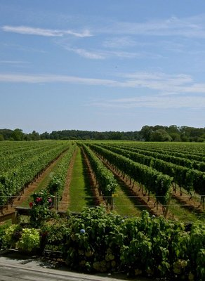 large_2014_vineyards_01.jpg