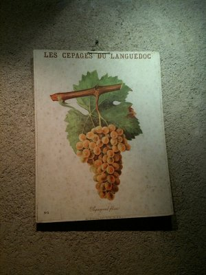 sign_of_th..l_grape.jpg