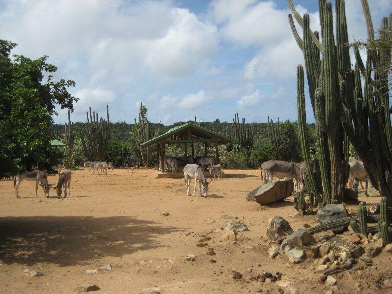 Aruba 947