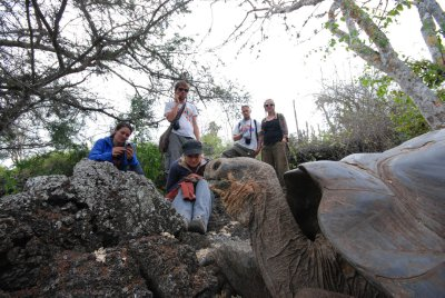 Giant tortoises lazing around
