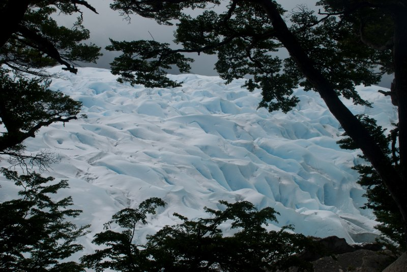 Glimpse of the glacier through the trees
