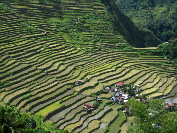 Unesco World Heritage - listed Ifugao rice terraces