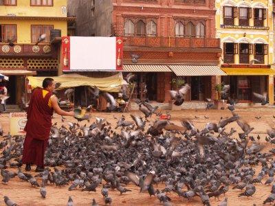 Pigeons by Bouddhanath Stupa