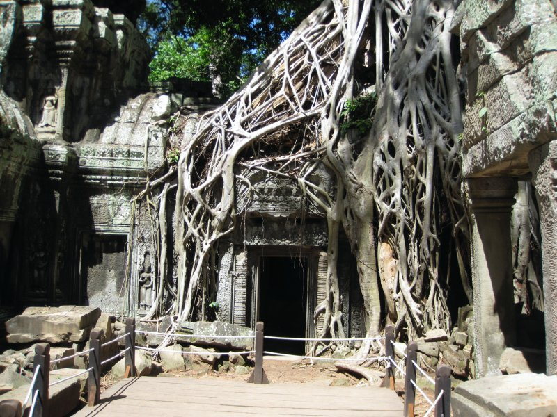 Tomb Raider Tree - Ta Prohm