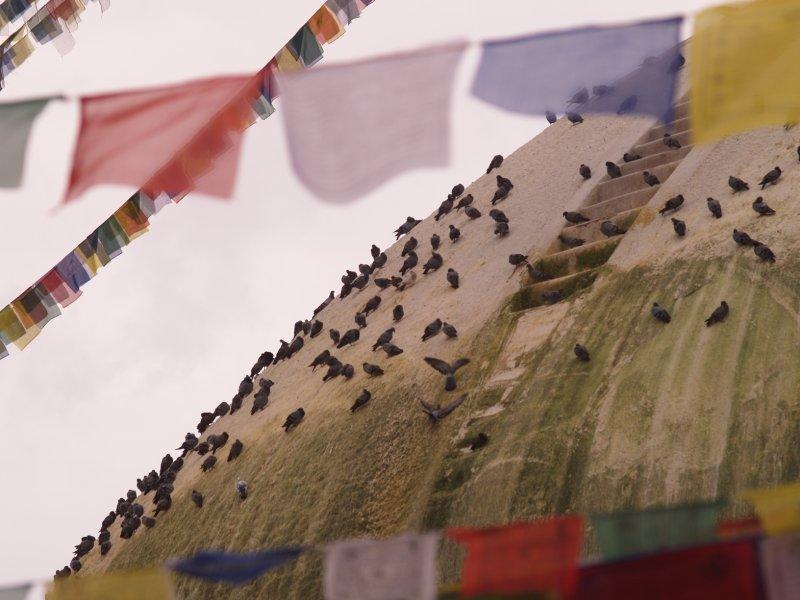 Pigeons on the stupa