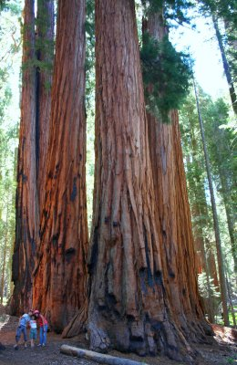 The Senat Sequoia national Park