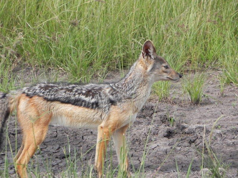 masai Mara Migration 042