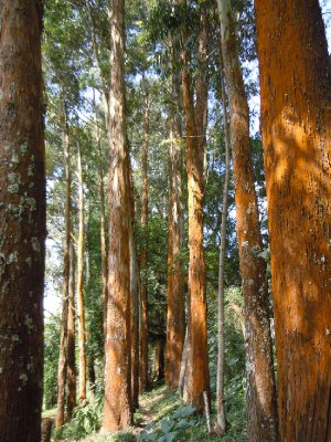 Tall trees on our nature walk