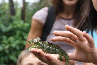 Speaking of chameleons