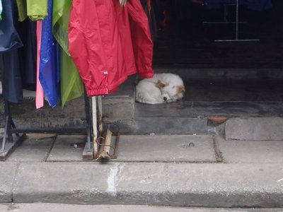 Sleeping dog near Hue Citadel