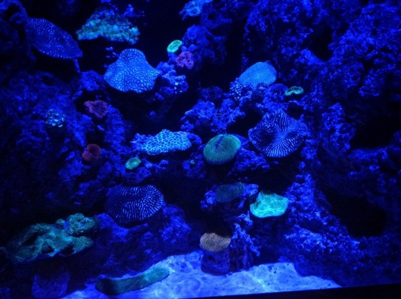 Ultraviolet marine