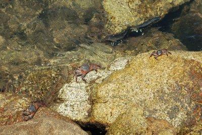 Crabs running around
