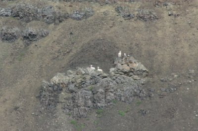 The Dall sheep were never really close but we did see them.  In this area there were at least 14 of them on the hillside.