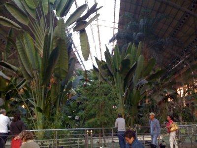 Madrid_Atocha_Station.jpg